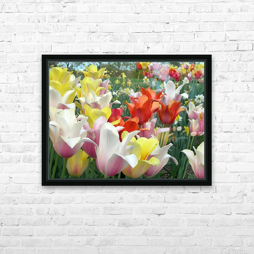 Beautiful Tulip Garden Photograph HD Sublimation Metal print with Decorating Float Frame (BOX)