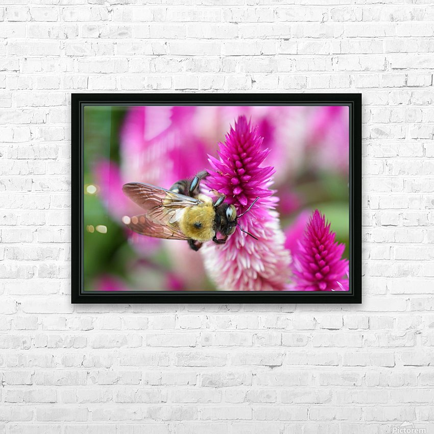 Bee On Pink Flower Photograph HD Sublimation Metal print with Decorating Float Frame (BOX)