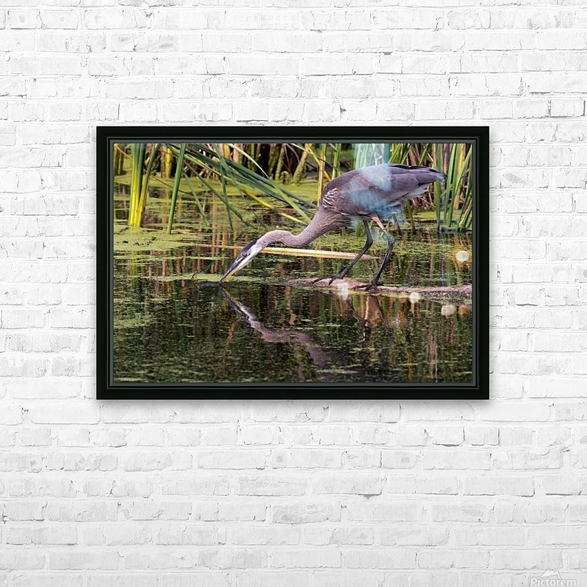 Great Blue Heron taking a Sip HD Sublimation Metal print with Decorating Float Frame (BOX)
