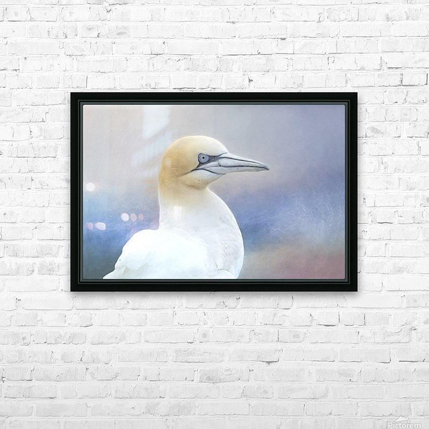 Northern Gannet HD Sublimation Metal print with Decorating Float Frame (BOX)