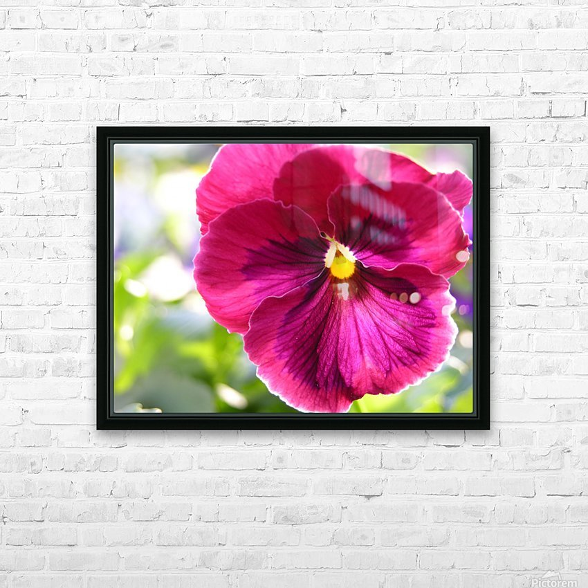 Pink Pansy Photograph HD Sublimation Metal print with Decorating Float Frame (BOX)
