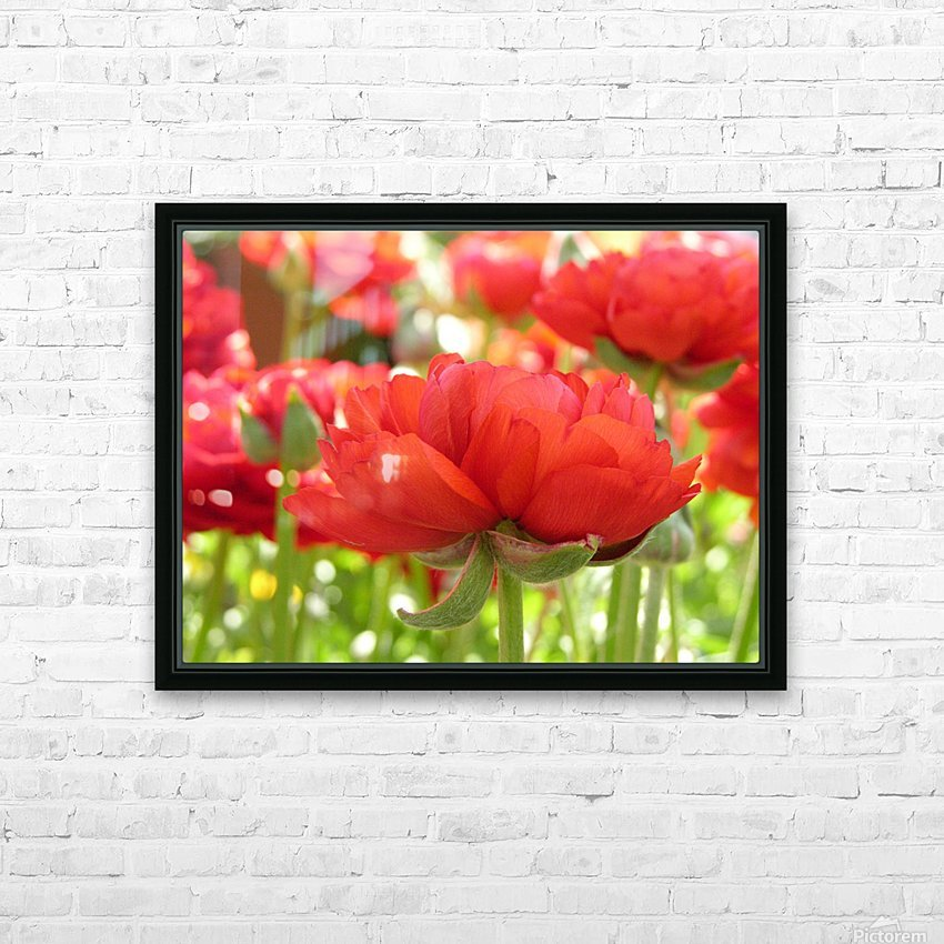 Red Rose Garden Photograph HD Sublimation Metal print with Decorating Float Frame (BOX)
