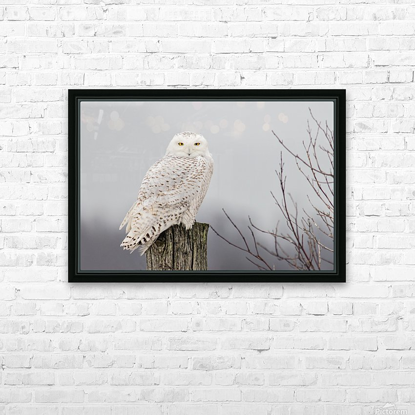 Snowy Owl on the Fence HD Sublimation Metal print with Decorating Float Frame (BOX)