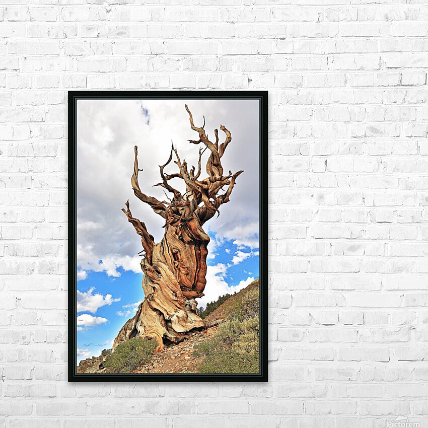 Ageless HD Sublimation Metal print with Decorating Float Frame (BOX)