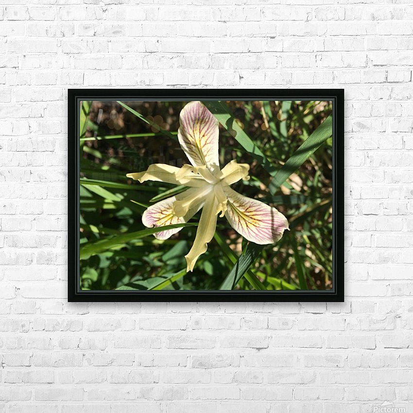 Siskiyou Iris HD Sublimation Metal print with Decorating Float Frame (BOX)