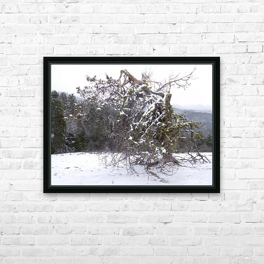 Ancient Mountain Juniper HD Sublimation Metal print with Decorating Float Frame (BOX)