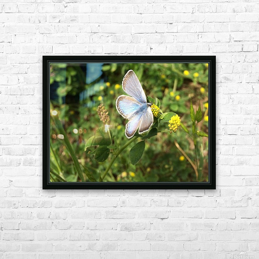 Blue Butterfly on Clover HD Sublimation Metal print with Decorating Float Frame (BOX)