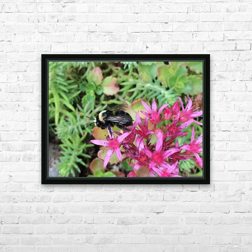 Bumblebee Visitor HD Sublimation Metal print with Decorating Float Frame (BOX)