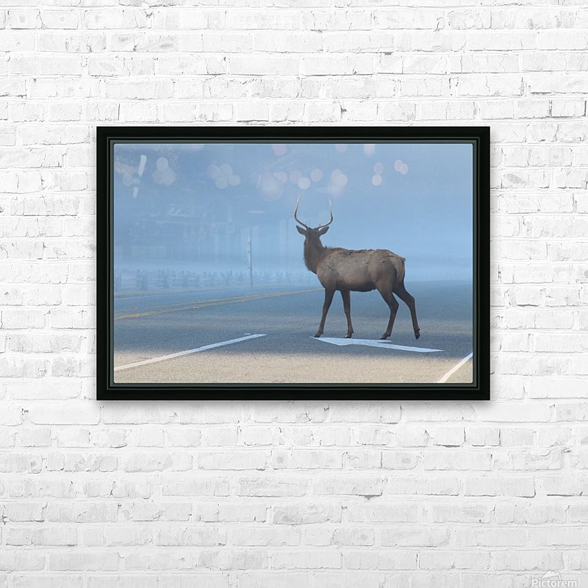 Elk Crossing HD Sublimation Metal print with Decorating Float Frame (BOX)