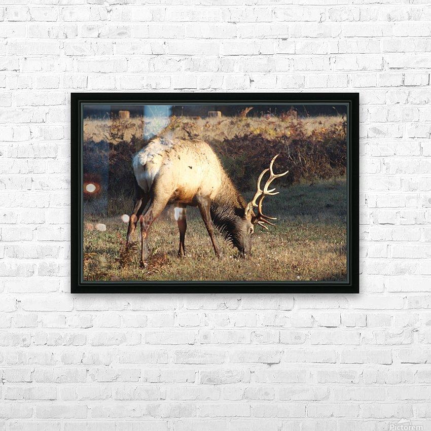 Roosevelt Elk HD Sublimation Metal print with Decorating Float Frame (BOX)