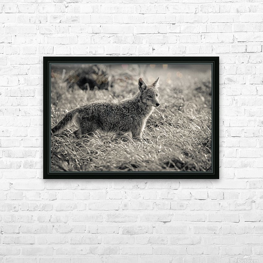 Coyote  HD Sublimation Metal print with Decorating Float Frame (BOX)