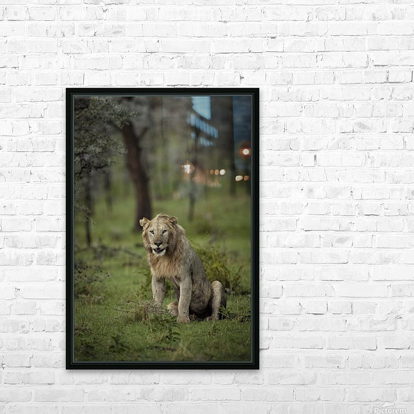 Lion under Rain by www.jadupontphoto.com HD Sublimation Metal print with Decorating Float Frame (BOX)