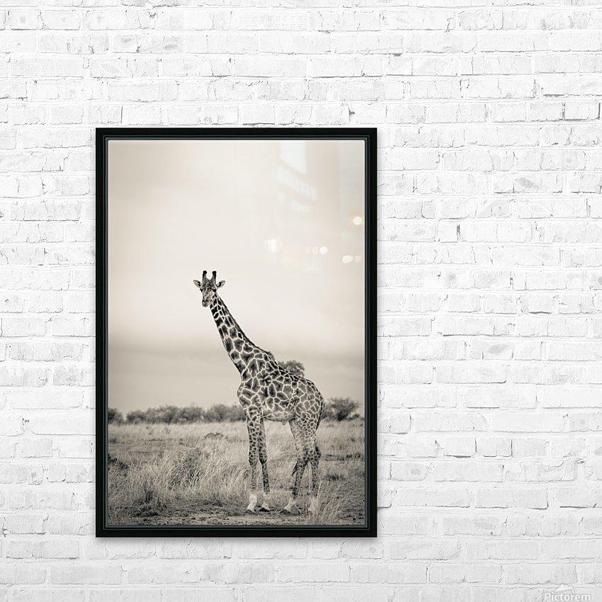 Majestic Giraffe by www.jadupontphoto.com HD Sublimation Metal print with Decorating Float Frame (BOX)