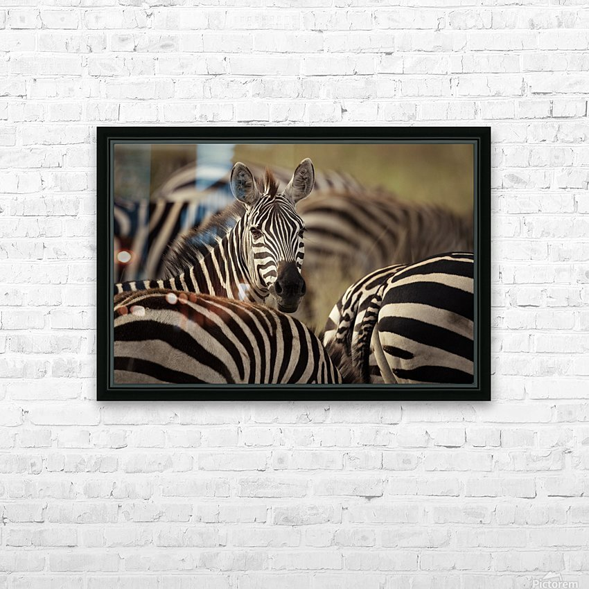Who is there - color by www.jadupontphoto.com HD Sublimation Metal print with Decorating Float Frame (BOX)