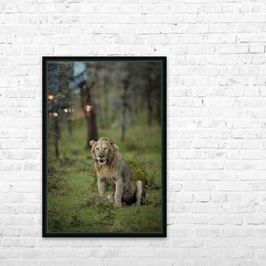 A Lions Tongue HD Sublimation Metal print with Decorating Float Frame (BOX)