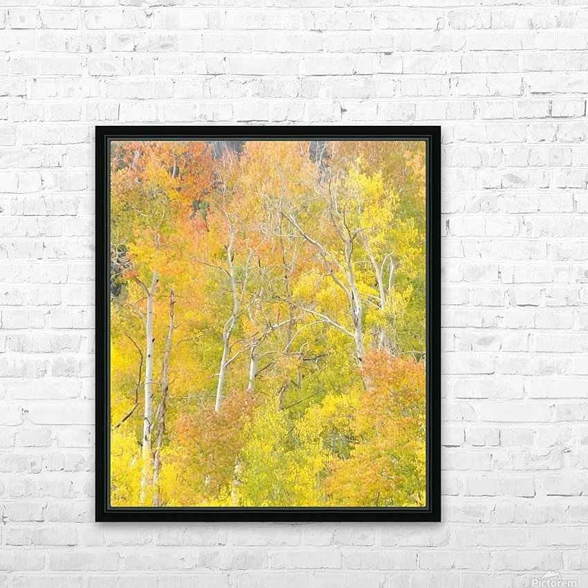 Changing Aspens - Vail Colorado HD Sublimation Metal print with Decorating Float Frame (BOX)