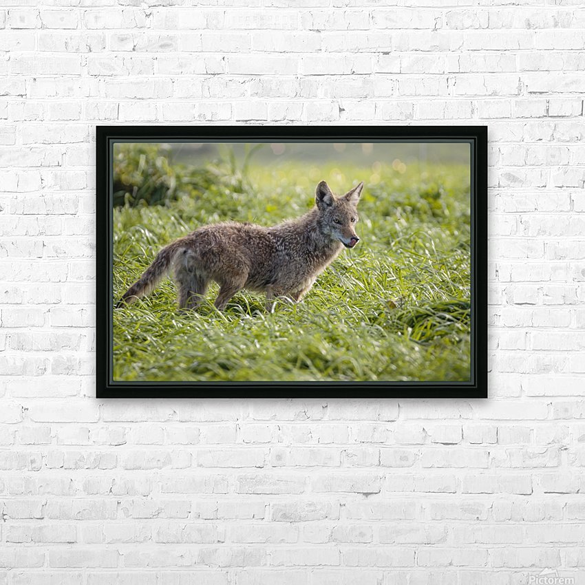 Coyote Pretty HD Sublimation Metal print with Decorating Float Frame (BOX)