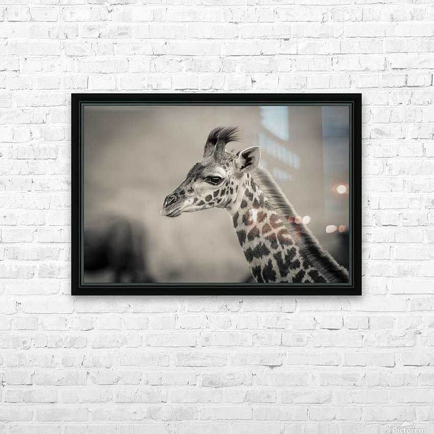 Girafe Calve HD Sublimation Metal print with Decorating Float Frame (BOX)
