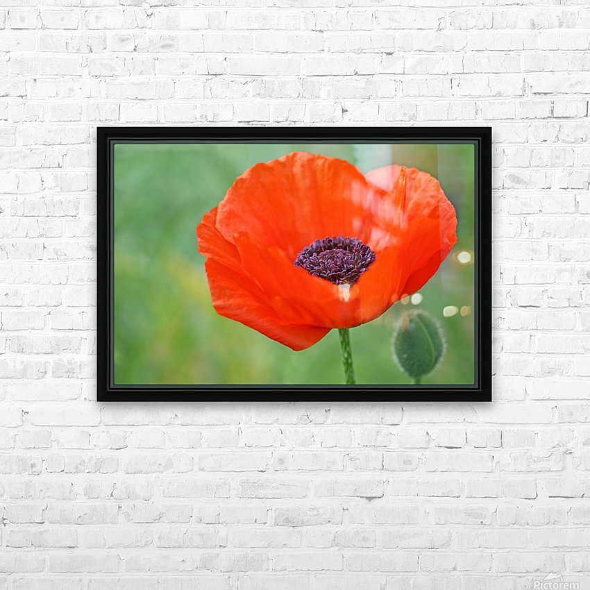 Poppy Red HD Sublimation Metal print with Decorating Float Frame (BOX)