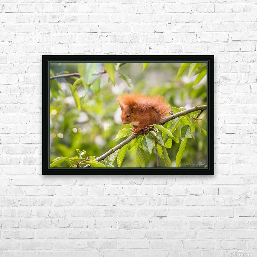 Squirrel HD Sublimation Metal print with Decorating Float Frame (BOX)