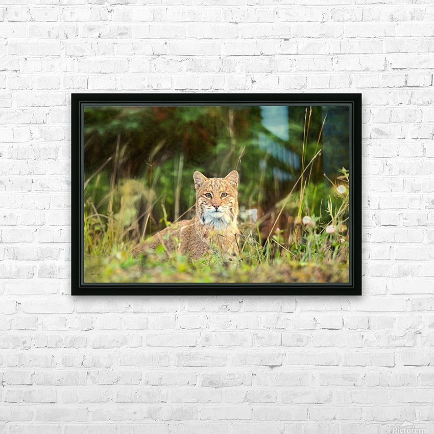 Bobcat HD Sublimation Metal print with Decorating Float Frame (BOX)