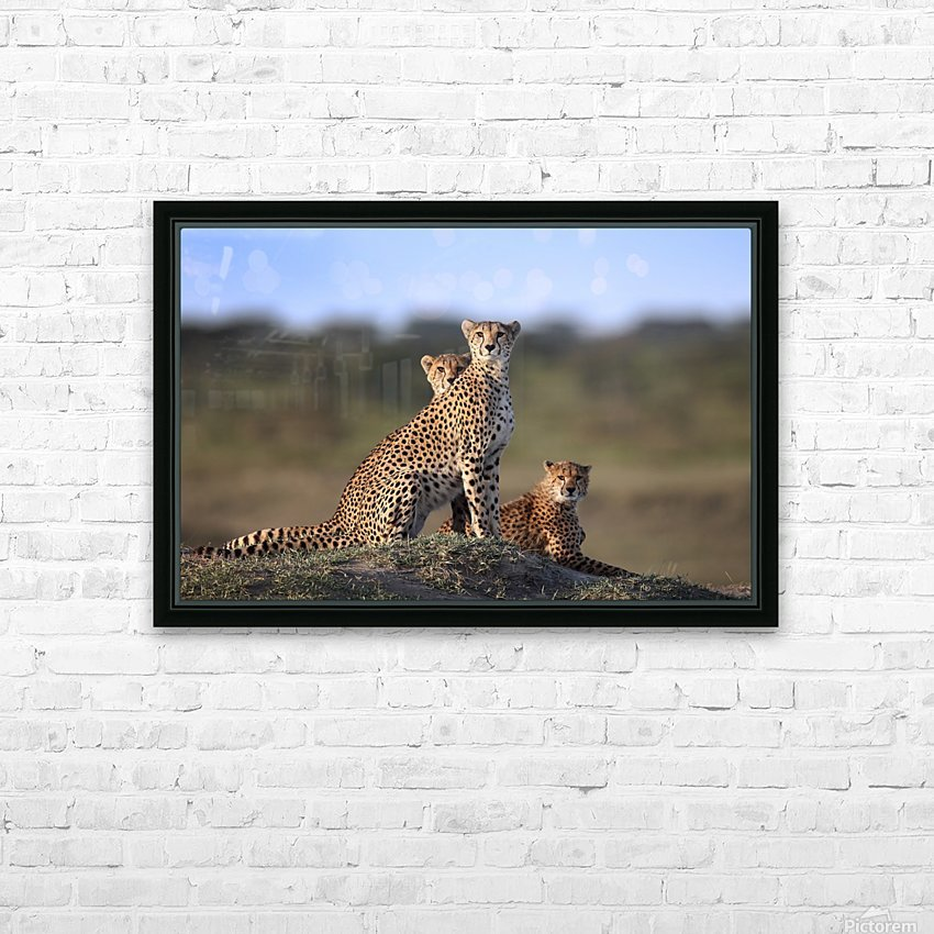 Cheetahs Family HD Sublimation Metal print with Decorating Float Frame (BOX)