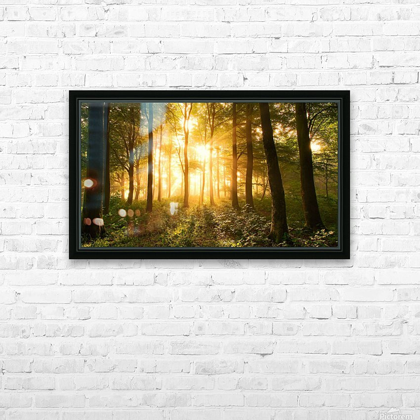 Light in the Forest. HD Sublimation Metal print with Decorating Float Frame (BOX)