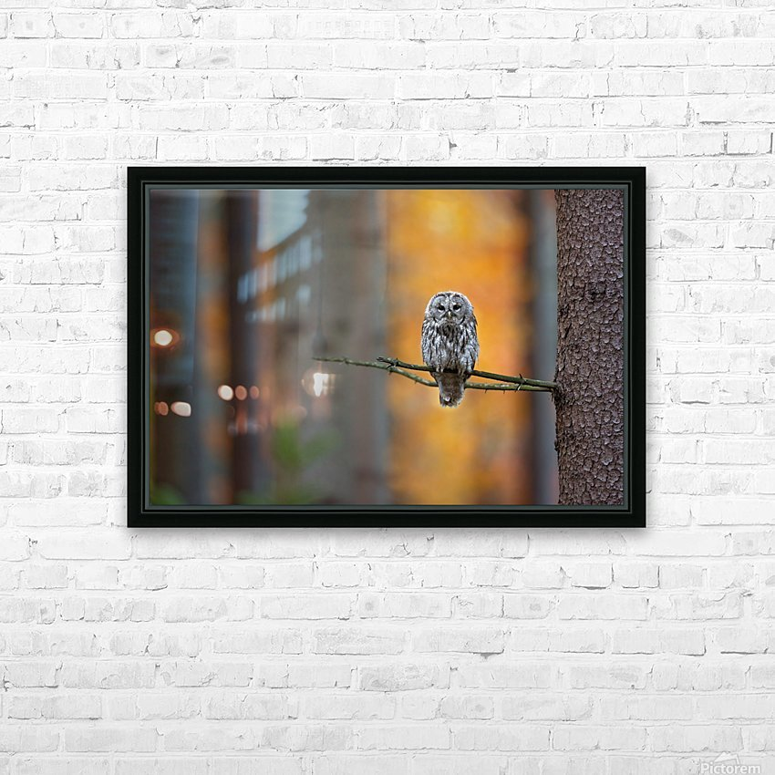 Tawny Owl HD Sublimation Metal print with Decorating Float Frame (BOX)
