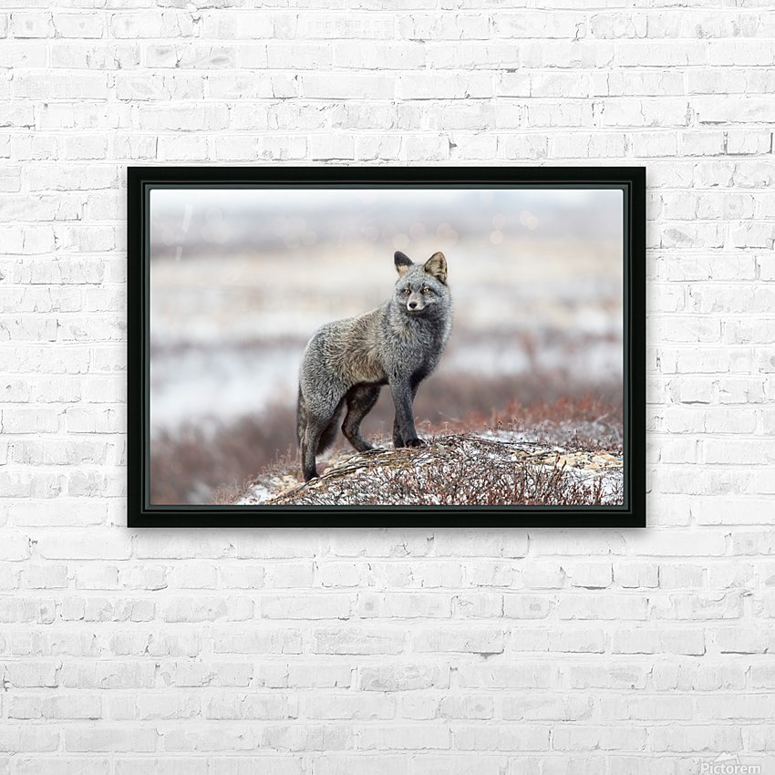 Cross Fox HD Sublimation Metal print with Decorating Float Frame (BOX)