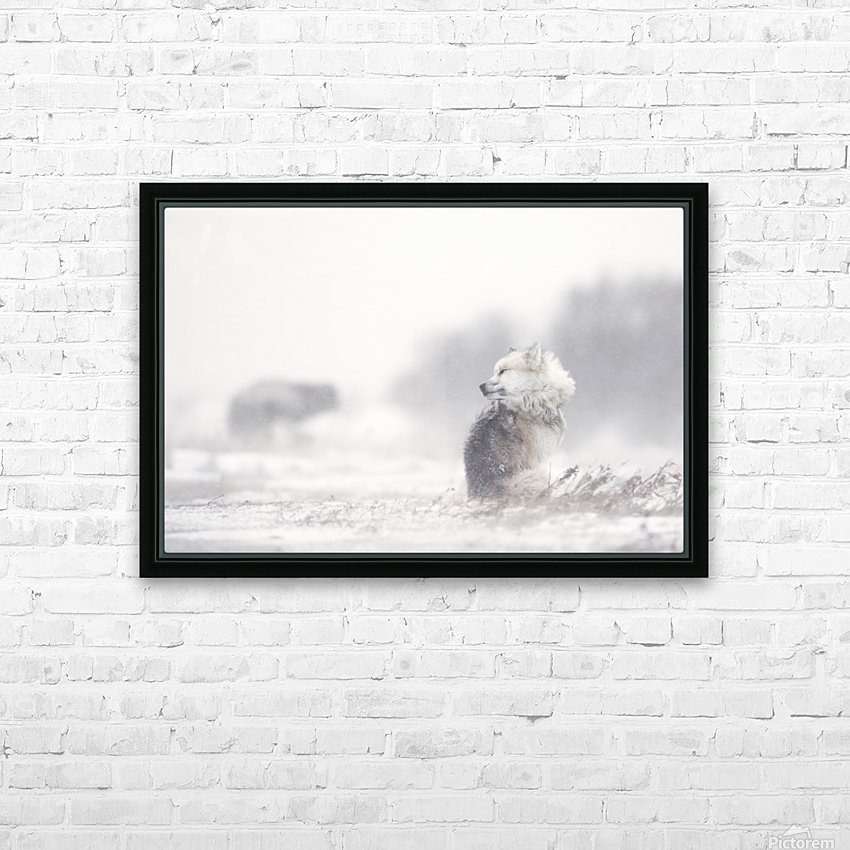 dogs in the storm HD Sublimation Metal print with Decorating Float Frame (BOX)