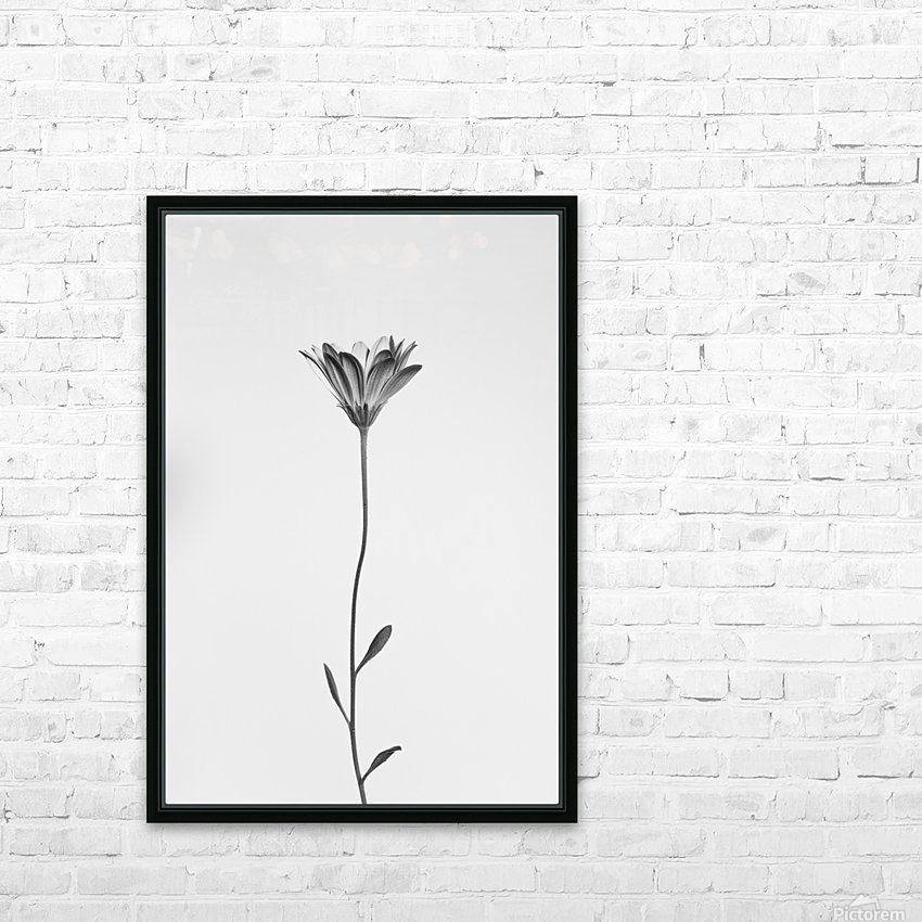 Daisy HD Sublimation Metal print with Decorating Float Frame (BOX)