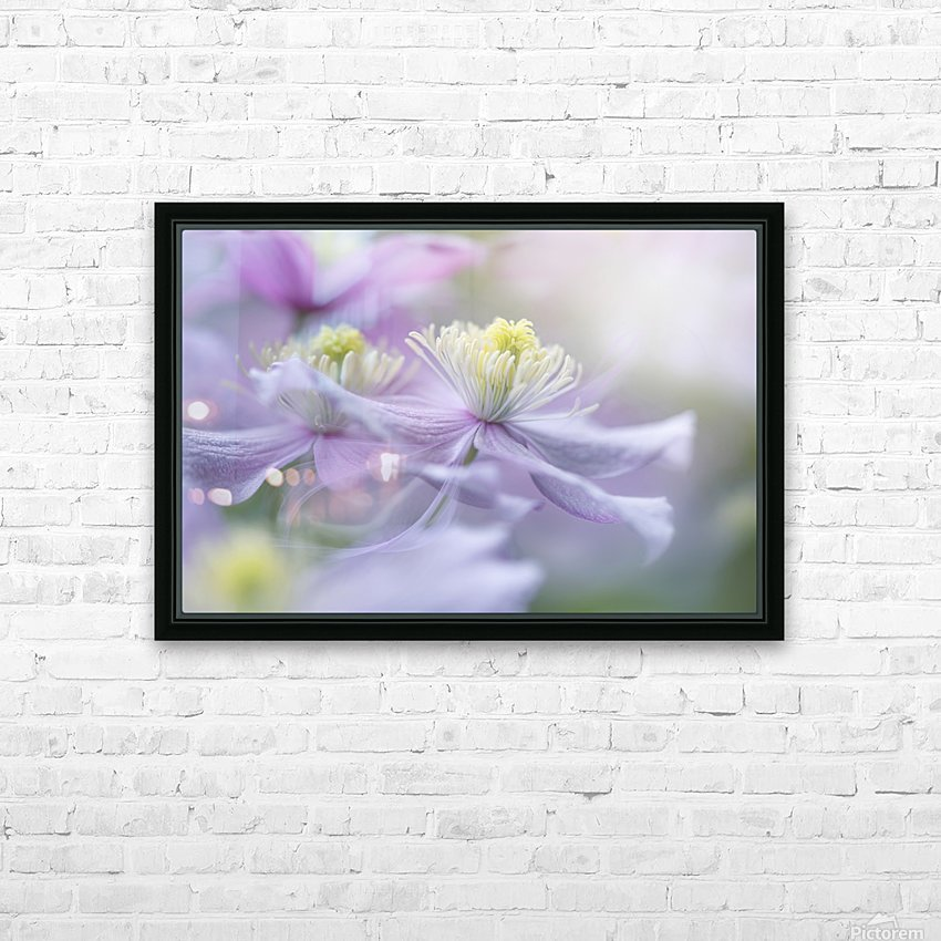 Clematis 'Mayleen' HD Sublimation Metal print with Decorating Float Frame (BOX)