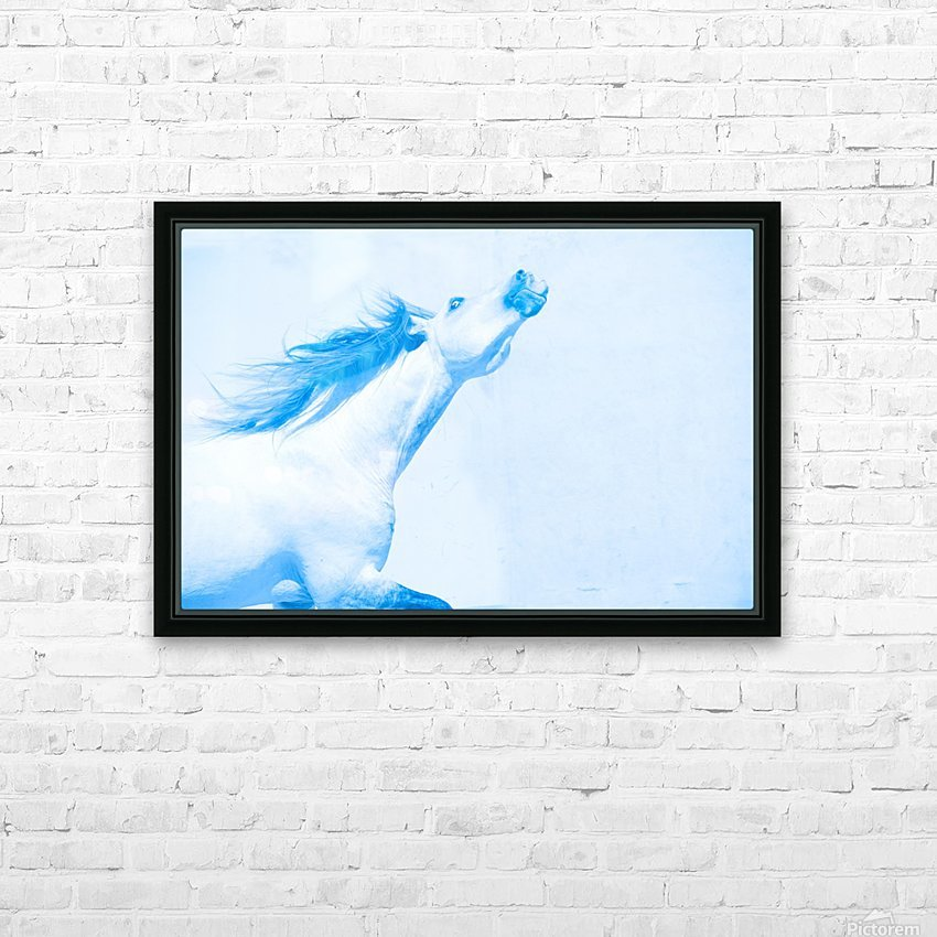 Blue Andalusian Horse 4 HD Sublimation Metal print with Decorating Float Frame (BOX)