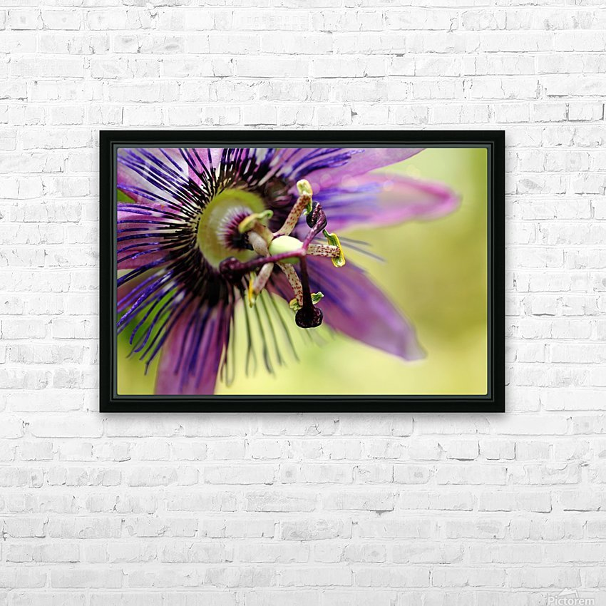 Purple Passion Flower HD Sublimation Metal print with Decorating Float Frame (BOX)