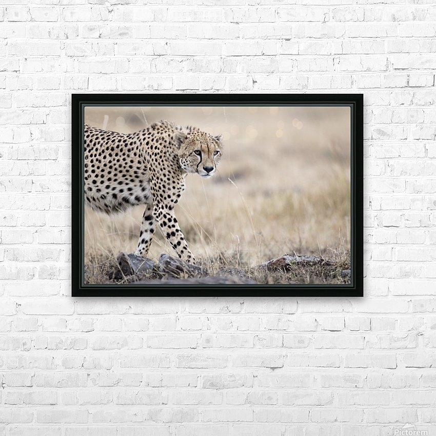 Cheetah Bro HD Sublimation Metal print with Decorating Float Frame (BOX)