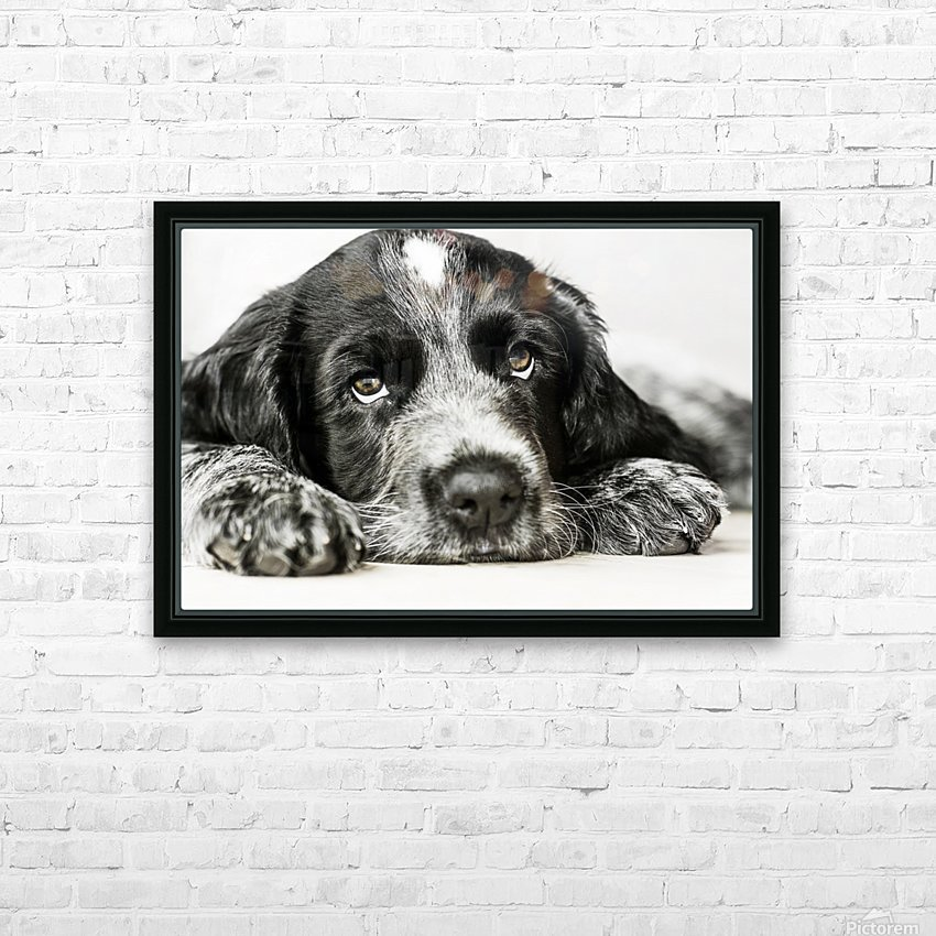 Cute Cocker Spaniel Puppy HD Sublimation Metal print with Decorating Float Frame (BOX)