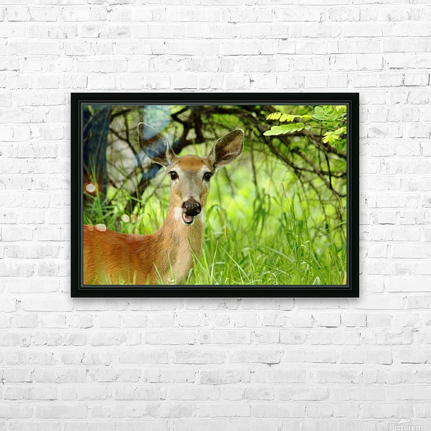 White   Tailed Deer Close Up HD Sublimation Metal print with Decorating Float Frame (BOX)