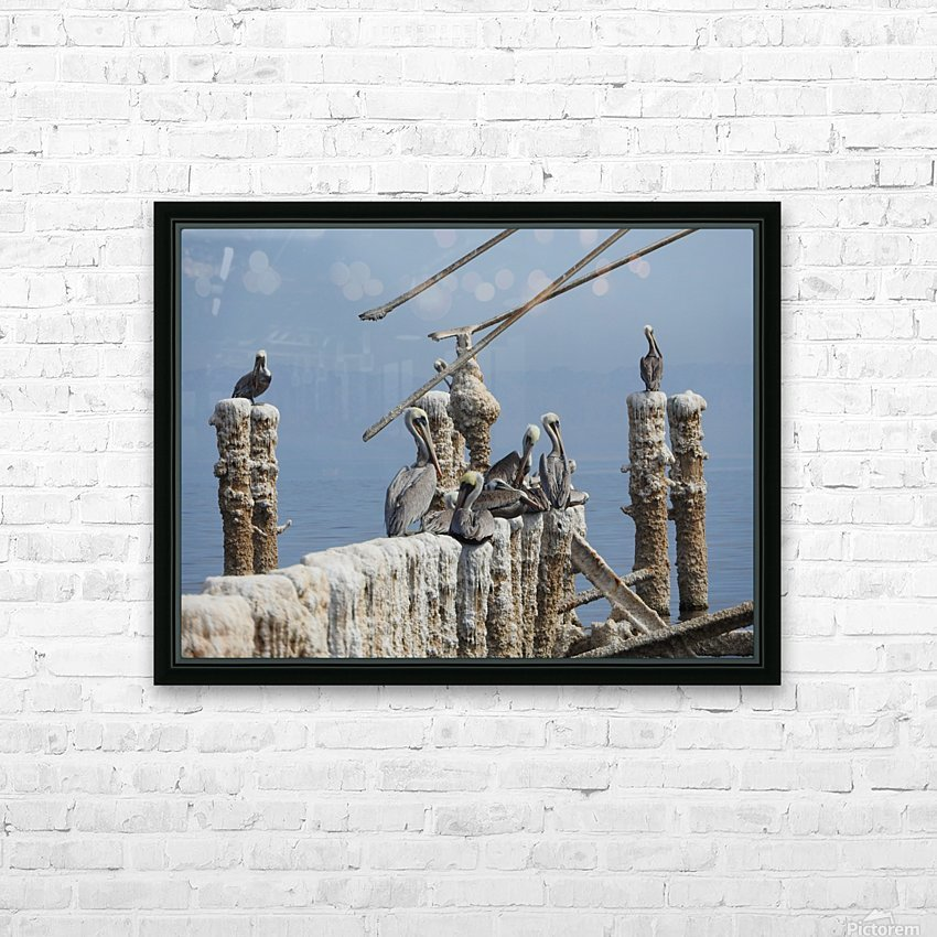 Brown Pelicans HD Sublimation Metal print with Decorating Float Frame (BOX)