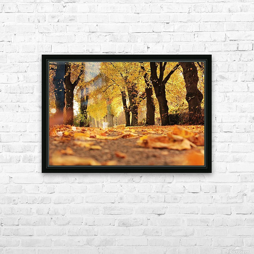 Beautiful Nature Landscape Tree Forest Trees Photography landscape photo Scenery HD Sublimation Metal print with Decorating Float Frame (BOX)