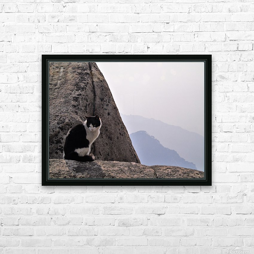 Mountain Cat HD Sublimation Metal print with Decorating Float Frame (BOX)