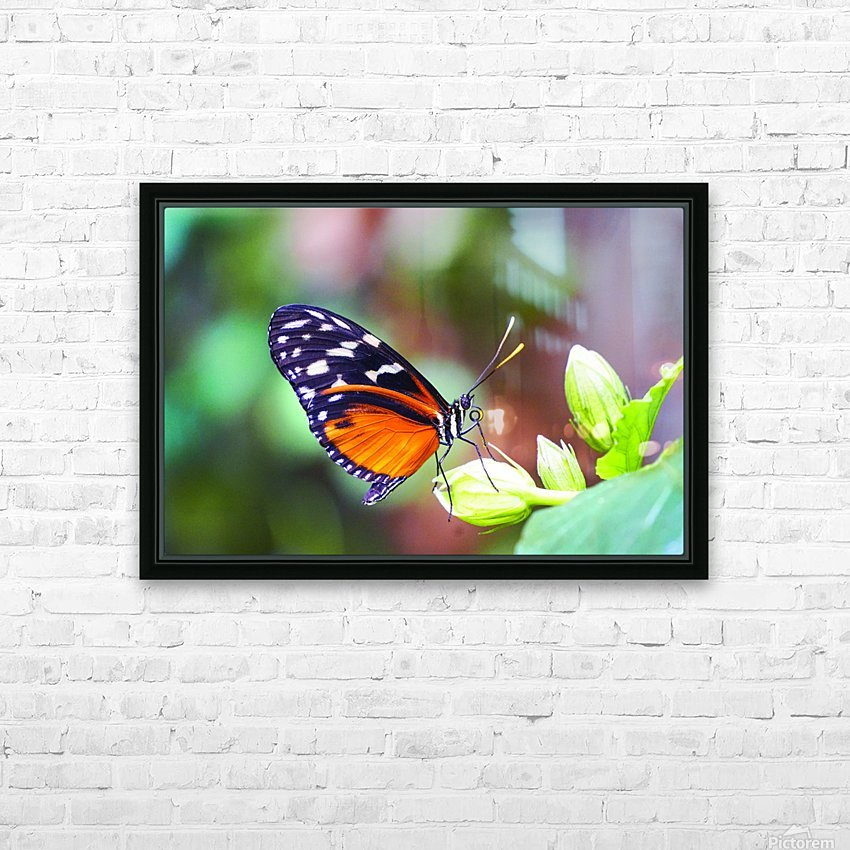 Monarch on a Bud HD Sublimation Metal print with Decorating Float Frame (BOX)