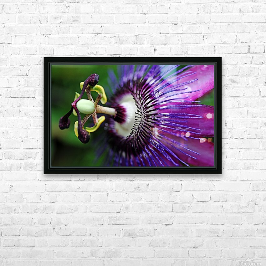 Passion Flower In Purple HD Sublimation Metal print with Decorating Float Frame (BOX)