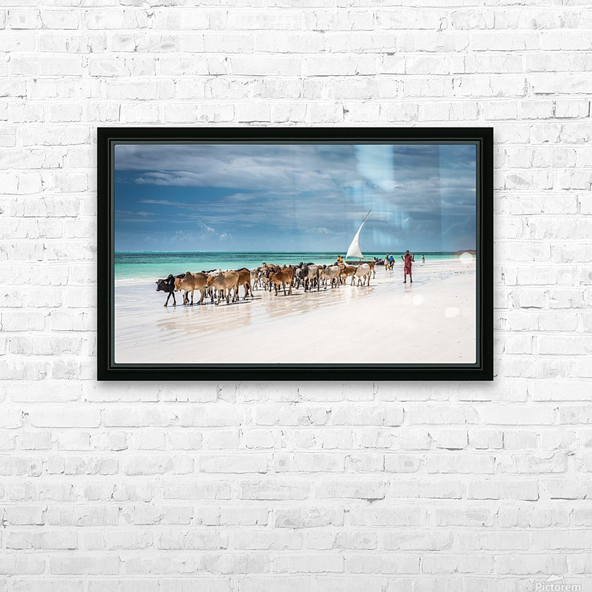 Masai cattle on Zanzibar beach HD Sublimation Metal print with Decorating Float Frame (BOX)