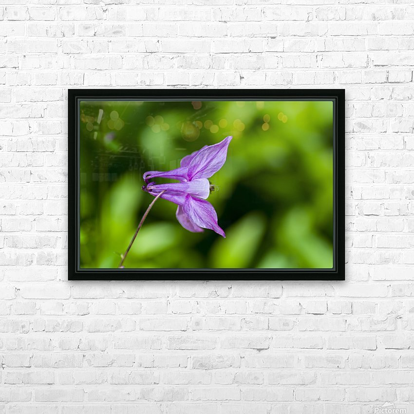Purple Columbine 2 HD Sublimation Metal print with Decorating Float Frame (BOX)