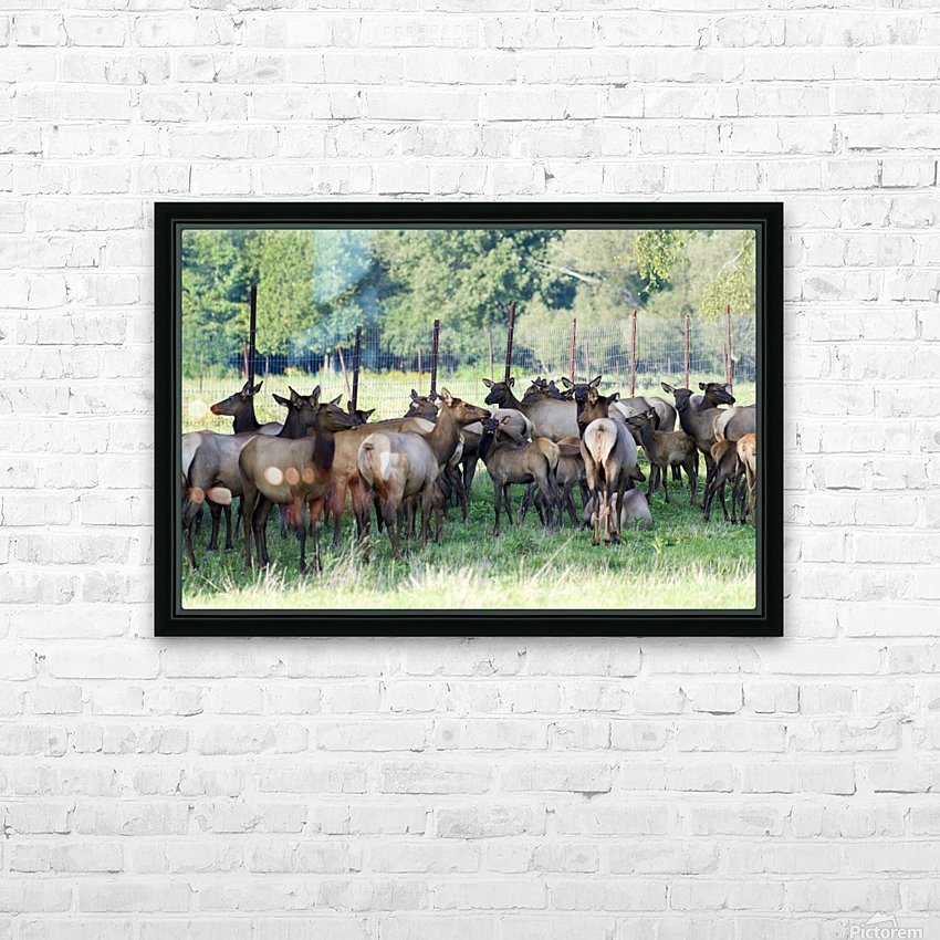 Elk Red Tailed Deer or Wapiti 16 HD Sublimation Metal print with Decorating Float Frame (BOX)