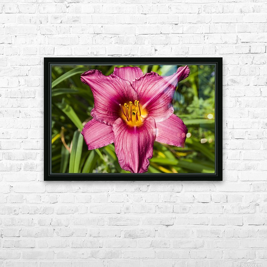 Purple Stella Doro Day Lily Flowers 2 HD Sublimation Metal print with Decorating Float Frame (BOX)