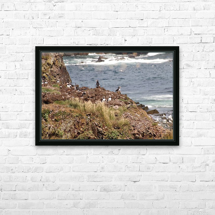 Puffins being puffins 15 HD Sublimation Metal print with Decorating Float Frame (BOX)