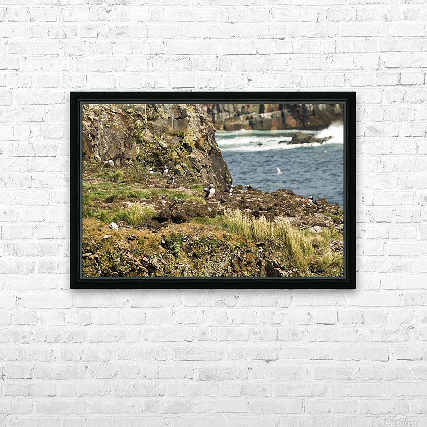 Puffins being puffins 9 HD Sublimation Metal print with Decorating Float Frame (BOX)
