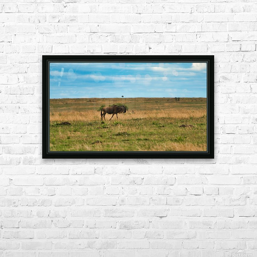 Cheetah stalking is prey HD Sublimation Metal print with Decorating Float Frame (BOX)