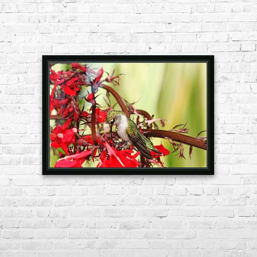 Hummingbird Giving Thanks HD Sublimation Metal print with Decorating Float Frame (BOX)